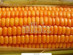 Кукуруза купить оптом, товар от производителя