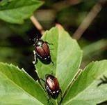 Би-58 (Бишка) Инсектициды