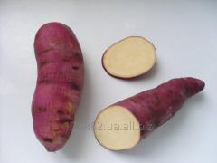 """Семена батата """"Теккен"""" Семенные"""