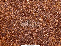 Coriander of GOST, coriander grain wholesale expor