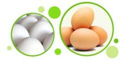 Egg chicken C1, C2, C0