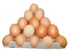 Egg of young chicken - C1, C2, C0