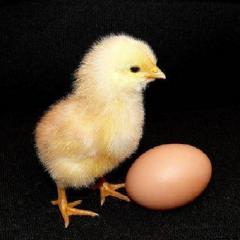 ПК 2-6 Комбикорм стартовый для цыплят с