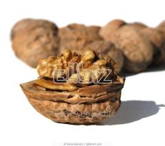 Орехи грецкие опт