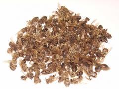 Bee subpestilence - Chitosan