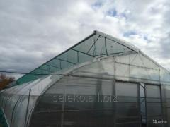 Greenhouse farmer 10