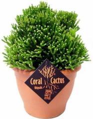 Зелёные растения по самым низким ценам