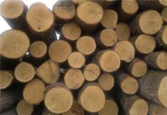 We get round timber (osika, aspen) Thickness: from