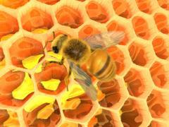 The honey mixed to a raznotravya