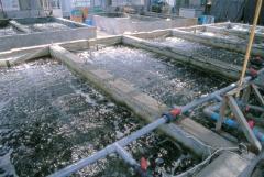Биопрепарат для очистки водоемов с большим