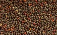 Семена редьки Зимней Черной