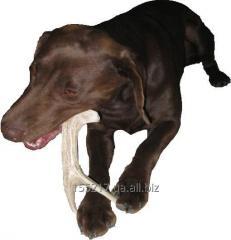Treats for dogs - deer Horns (Cervine horns)