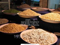 Зерно: кукуруза, подсолнечник, пшеница