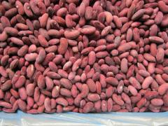 Beans the frozen red