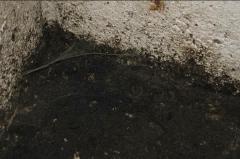 Удаление плесени, вирусов и микробов, грибков, инфекций - Харьков, Киев, Одесса