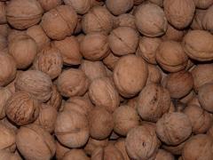 Продажа очищенного ореха грецкого на экспорт