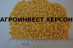Peas polished to wholesale, Ukraine