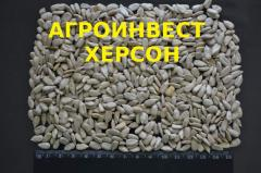 Kernel of seeds of sunflower confectionery, for