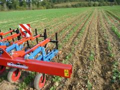 Cultivator for interrow processing of propashny