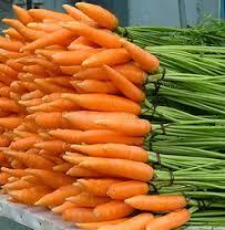 Морковь ранняя, опт