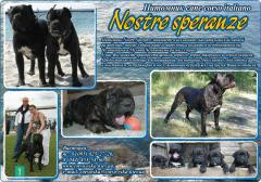 Puppies to Cana korso from professional nursery