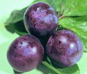 Fragrance for foodstuff - plum