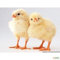 Комбикорм для цыплят-бройлеров всех возрастов