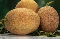 """Melon """"Amal"""