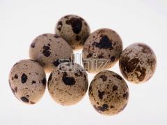 Яйца перепелиные пищевые