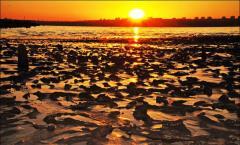 Therapeutic mud of the Kuyalnitsky estuary