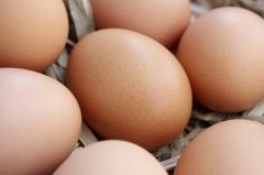 Яйца куриные, яйца домашней птицы