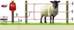 Електроизгороди для худоби, тварин, електропастух