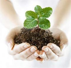 Pesticides, herbicides, fungicides, protravitel,