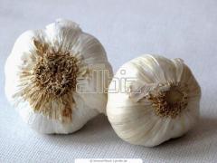 Garlic Lyubash's grade