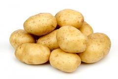 Картофель семенной, сорт Санте
