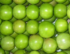 Apples fresh different summer, winter for export