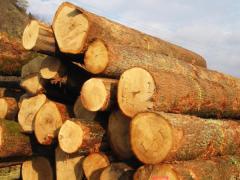 Круглый лес купить в Украине.