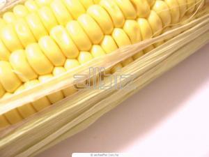 Corn for export, port, railway