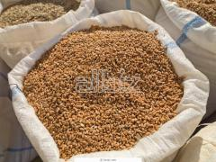 Sale of wheat from the producer