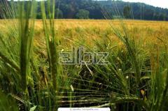 Grain fodder sale