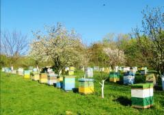 Honey organic