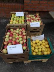 Poland wholesale I will sell pears the Price