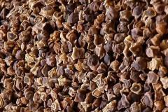 Seeds of fodder bee