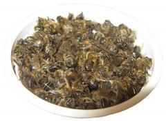 Настойка подмора бджіл, ціна