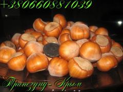 Крупноплодный фундук Трапезунд