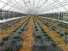 Farm, pigsty, greenhouses
