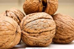 Walnuts to buy in Ukraine