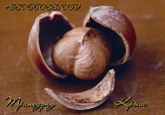 Skorupa orzecha włoskiego