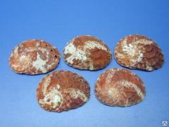Морская ракушка - халиотис красный 5,5-6