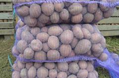 Тирас. Семенной картофель